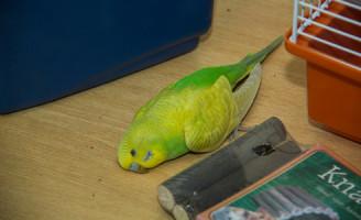 2 september Dode vogels in winkeletalage aangetroffen