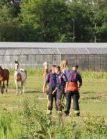16 juni Brandweer red paard uit sloot Goudse Houtsingel Gouda