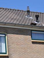 18 juni Brandweer rukt uit voor een kat in de dakgoot Douwes Dekkerstraat Reeuwijk