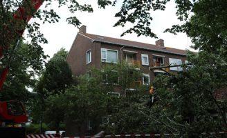 3 augustus Flinke boom waait om voor harde wind Mr. le Poolestraat Rijswijk