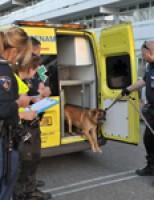Politie haalt agressieve hond uit woning Van Leeuwenhoeklaan Zoetermeer