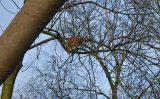 17 december Brandweer rukt uit voor een kat in de boom Hoefblad Waddinxveen