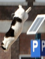 Kat springt uit de boom tijdens reddingsactie Halleyplein Schiedam
