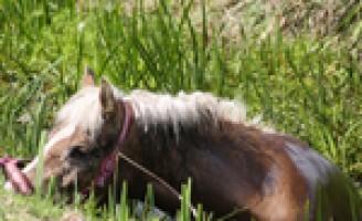 Brandweer helpt paard uit sloot Abtswoude Delft