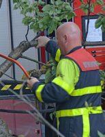 15 juni Auto raakt beschadigd door omgevallen boom Van Kinsbergenstraat Den Haag