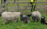 28 april Brandweer rukt uit voor dier te water Westerpark Zoetermeer