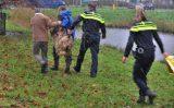 10 december Schaap onderkoeld na te water raken in sloot Juweellaan Zoetermeer