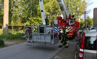 5 juni Brandweer redt kat uit de boom in Delft