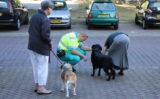 22 augustus Persoon en hond gewond bij aanrijding Van Foreestweg Delft