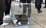 2 oktober Bewoner gewond bij felle woningbrand Randveen Den Haag