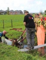 5 oktober Paard uit sloot gered door brandweer en omstanders Laan van Adrichem De Lier[VIDEO]