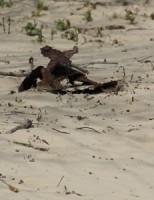 Bijtende stof gevonden in de duinen Den Haag