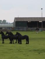 23 mei Brandweer haalt paard uit de sloot Klaas Engelbrechtsweg Schipluiden
