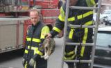 1 maart Kat zoekt het hoger op in een boom Schalk Burgerstraat Den Haag