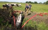 21 mei Brandweer haalt koe uit de sloot Vlaardingsekade Schipluiden