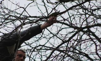Brandweer redt zeldzame vogel uit de boom