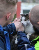 7 maart Brandweer haalt vermiste kat uit de boom aan de Vulcanusweg in Delft [VIDEO]