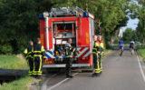 22 juli Koe neemt verfrissende modderduik in sloot Zouteveenseweg Schipluiden