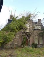 6 december Boom op villa Maredijk Leiden