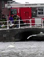 Melding zwaan vast op het ijs Oostsingel