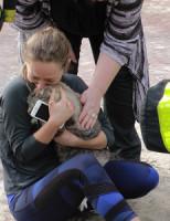 15 februari Brandweer redt kat uit woning na brand Vlamingstraat Delft [VIDEO]