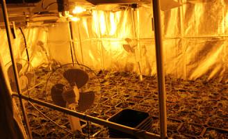 20 juni Hennepkwekerij (500 plantjes) ontmanteld Loosduinseweg Den Haag