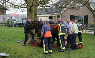 30 maart Paard te water Compierkade Alphen aan den Rijn