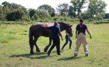 16 juli Brandweer takelt paard uit de sloot Groeneweg Schiedam
