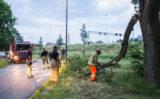 28 juni Afgebroken tak hindert verkeer Vlaardingen
