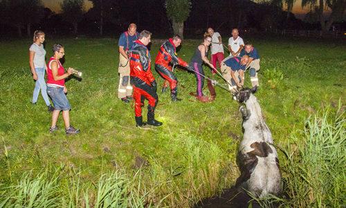 """<h2><a href=""""http://district8.net/23-augustus-paard-moeilijk-uit-het-water-te-krijgen-woudweg-harreweg-schiedam.html"""">23 augustus Paard moeilijk uit het water te krijgen Woudweg / Harreweg Schiedam<a href='http://district8.net/23-augustus-paard-moeilijk-uit-het-water-te-krijgen-woudweg-harreweg-schiedam.html#comments' class='comments-small'>(0)</a></a></h2>  Schiedam - Dinsdagavond werd de brandweer met spoed opgeroepen voor een dier in nood aan de Woudweg / Harreweg in Schiedam. Ter plaatse bleek een paard op leeftijd in het"""
