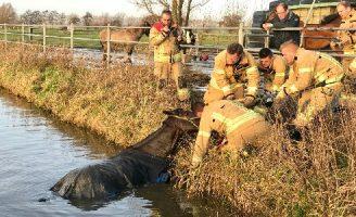 30 december Brandweer redt paard uit de sloot Oostveenseweg Schiedam