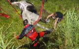 23 augustus Paard moeilijk uit het water te krijgen Woudweg / Harreweg Schiedam
