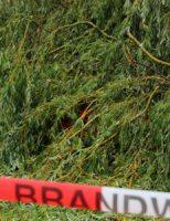 12 juli Boom omgevallen op meerdere auto's Rotterdam