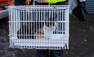 1 februari Kat bevrijdt uit garagebox Schiedam
