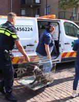 8 augustus Huisdieren gered bij woningbrand Duizendguldenkruid Vlaardingen