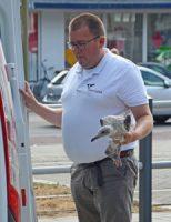 1 augustus Brandweer redt vast zittende meeuw van dak Zeesluisweg Den Haag