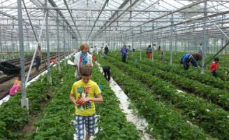23 juni Plukmorgen en speurtocht in Boeregoed Volkskas boven verwachting
