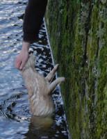 28 maart Kat waait het water in Noordeinde Delft